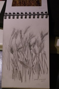 Pencil Drawing - Ripening Wheat