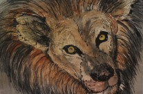Lion – Beautiful Eyes