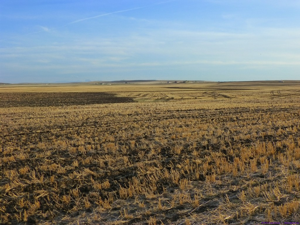Golden Prairie - Southern Alberta during seeding season